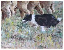 The Border Collie - By Elaine Farragher