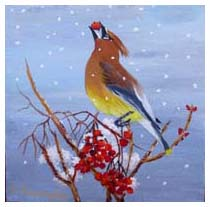 Winter Waxwing - By Elaine Farragher