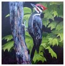 Pileated Woodpecker - By Elaine Farragher